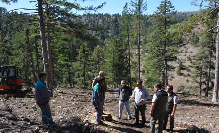 Arslanköy'de ormancılık faaliyetlerini incelendi