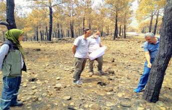 Mersin'de Yangın Alanlarının Gençleştirme Tespitleri Tamamlandı