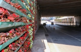 Tulumba Köprüsü Çiçeklendi