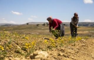 Büyükşehir'in Tarıma Destekleri Çiçek Açıyor,...
