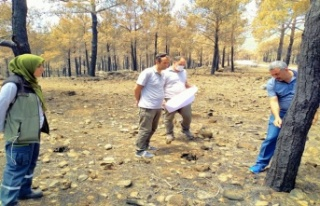Mersin'de Yangın Alanlarının Gençleştirme Tespitleri...